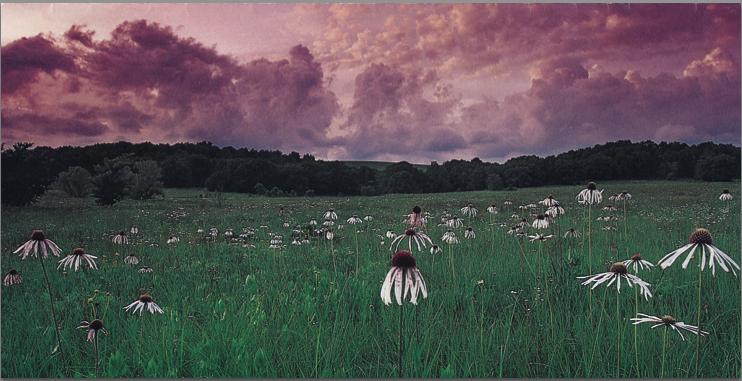 Landscape Quilt by Nancy Zieman