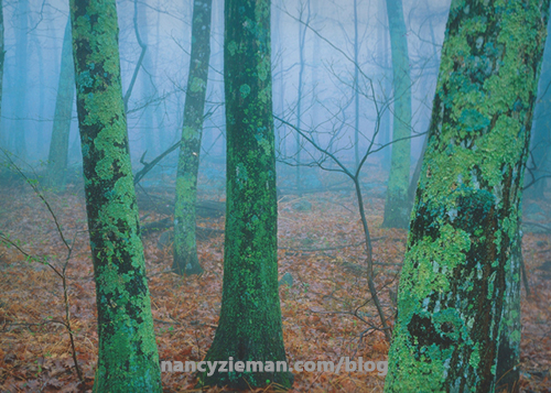 Landscape Quilt Photo Inspiration by Nancy Zieman | Sewing With Nancy